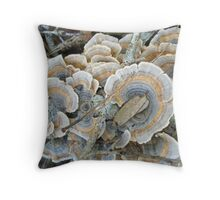 Turkey Tail Shelf Fungus - Trametes versicolor Throw Pillow