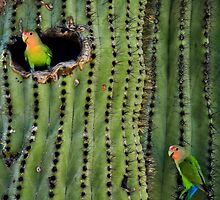 Lovebirds and the Saguaro by Saija  Lehtonen