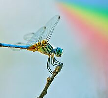 Rainbow Dragonfly by Bonnie T.  Barry