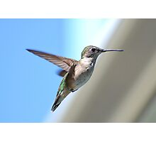 A Flying Jewel Photographic Print