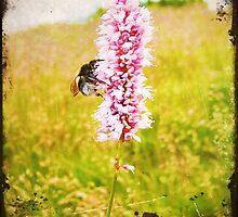 sunny meadow by agawasa