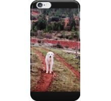 Pyrenean Mountain Dog iPhone Case/Skin