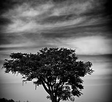 Solitary by Deepak Varghese
