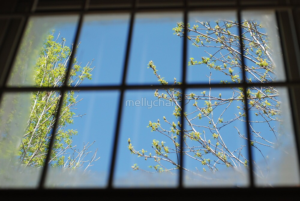 spring outside my cell by mellychan