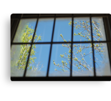 spring outside my cell Canvas Print