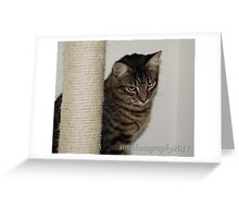 Horatio the great Greeting Card