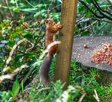 Have You Seen The Size Of My Nuts? by VoluntaryRanger