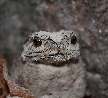 Toad on the beach in Phuket, Thailand by Justin Knewstub
