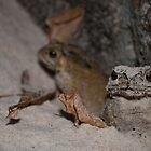 Toad and friend on the beach in Phuket, Thailand by Justin Knewstub