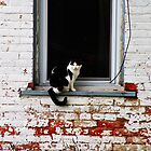 Window Cat by Jeffrey J. Miller