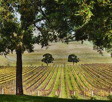 Autumn Vines by annibels