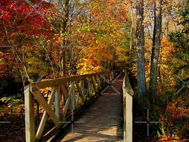 Walk With Me by Lisa G. Putman