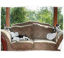 3 Cats on the Loveseat Poster