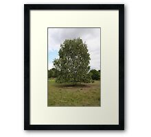 ONE SINGAL TREE ON SHOW  Framed Print