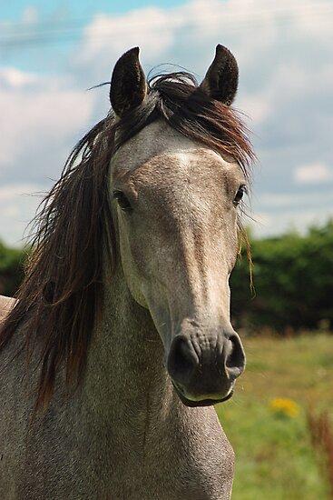 Golden Connemara Pony by ConnemaraPony