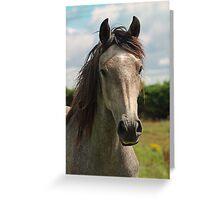 Golden Connemara Pony Greeting Card