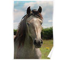 Golden Connemara Pony Poster
