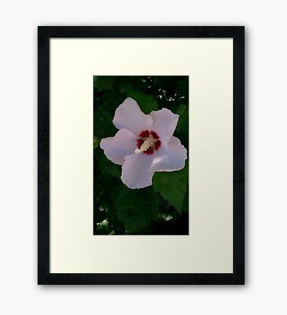 Flower Power 2 Framed Print