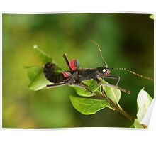 Beauty Stick Insect Poster