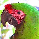 Hi! I'm living here - in the jungle of Puerto Vallarta by Bernhard Matejka