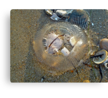 Stranded by the Tide - Clear Jellyfish Canvas Print