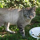 neglected neighbors cat by fotoflossy