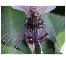 Tropical flower with alien faces Poster