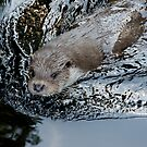 Animal Life - Nutria by Daidalos