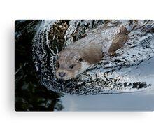 Animal Life - Nutria Canvas Print