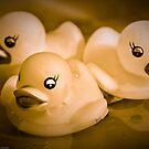 Monochromatic Ducks by Susana Weber
