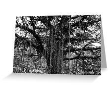 Cameroon Tree Greeting Card