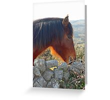 Redhead - Connemara Pony Greeting Card