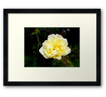 A touch of yellow  Framed Print