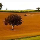 Farm Land, South Hams by Mike  Waldron