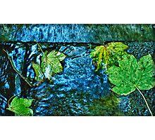 Leaf Chantra Photographic Print