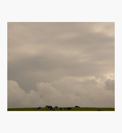 Big Sky Little Cows - Ireland Photographic Print