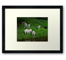 6 Pack Framed Print