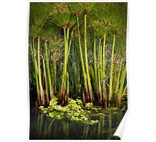 Papyrus Pond Poster
