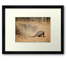 Make Your Escape While I Guard The Rear! Framed Print