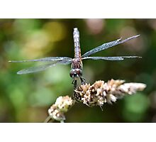 Tattered Wings Photographic Print