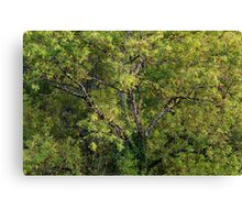 One tree with branches and leaves Canvas Print