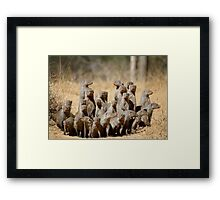 A Business of Mongoose Framed Print