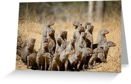 A Business of Mongoose by Michael  Moss