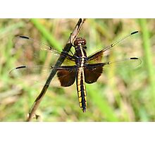 Widow Skimmer Female Photographic Print