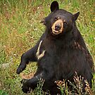Black Bear Smile by Jan Cartwright
