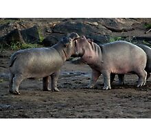 Africa Continues - Good Morning Hippos Photographic Print