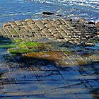 Tessellated pavement, Forestier Peninsula, Tasmania by Margaret  Hyde