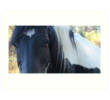 Beautiful Black n White Tobiano Paint Art Print