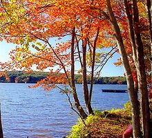 Autumn lake, Connecticut by Alberto  DeJesus