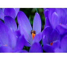 Ladybird Photographic Print